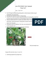 Program  PKL (laporan harian).docx