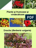 Plante Si Frumoase Si Vindecatoare