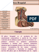 plexobraquial-100502192857-phpapp02