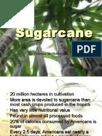 Sugarcane Presentation