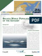 FOC 2008_Beluga Fact Sheet