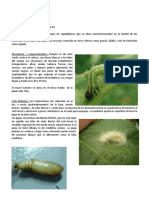 Ficha-tcnica-N-18---Rachiplusia.pdf