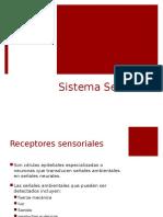 Neurofisiología Sistema Sensorial