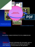 Manejo reproductivo del bovino