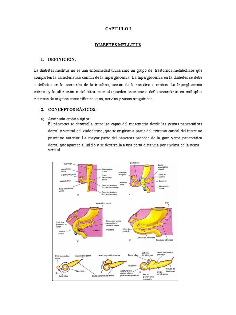 Único Anatomía De La Diabetes Mellitus Embellecimiento - Imágenes de ...