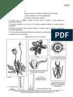 Loasaceae  NAYSHA