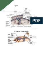 Anatomi Kulit kepala.docx