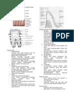 94546855-Anatomi-Gigi-Dan-Jaringan-Pendukung.doc