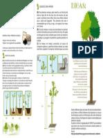 Cartilha de Arborização Urbana 2
