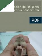 Adaptacion de Los Animales