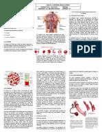 aparato circulatorio.pdf