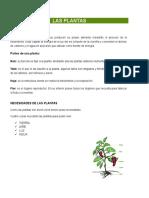 LAS_PLANTAS_medicinaes[1]