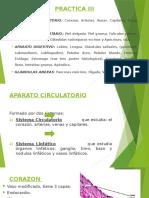 PRACTICA III de Histologia