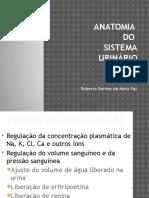 11- Sistema Urinário - ODONTO