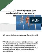 Delimitari Conceptuale Ale Anatomiei Funcționale Și Biomecanice
