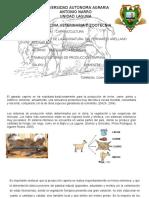 Sistemas de Producion Cabras