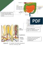 digestion.pdf