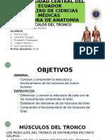 Anatomia Seminario.pptx