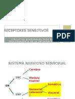 receptoressensitivos