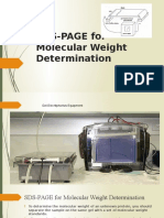 SDS-PAGE for Molecular Weight Determination