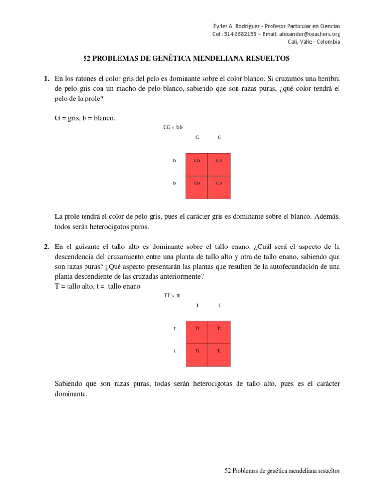 Moderno Punnett Hoja Cuadrada 1 Ilustración - hojas de trabajo ...