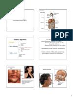 2012 - Aula Cavidade Oral e Glandulas Salivares