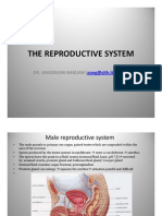 The Reproductive System [Compatibility Mode]