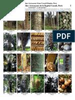 820 Peru-useful Palms From Ucayali