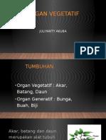 Organ Vegetatif