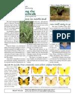 November 2008 Along the Boardwalk Newsletter Corkscrew Swamp Sanctuary