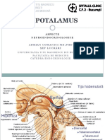 c2 Hipotalamus b