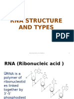 RNA Structure and Types