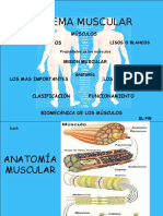sistemamuscular-100314222100-phpapp01