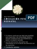 circulacinfetalyneonatal