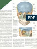 Netter Neuroanatomia