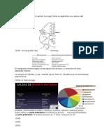 Ginecologia-Obstetricia.docx