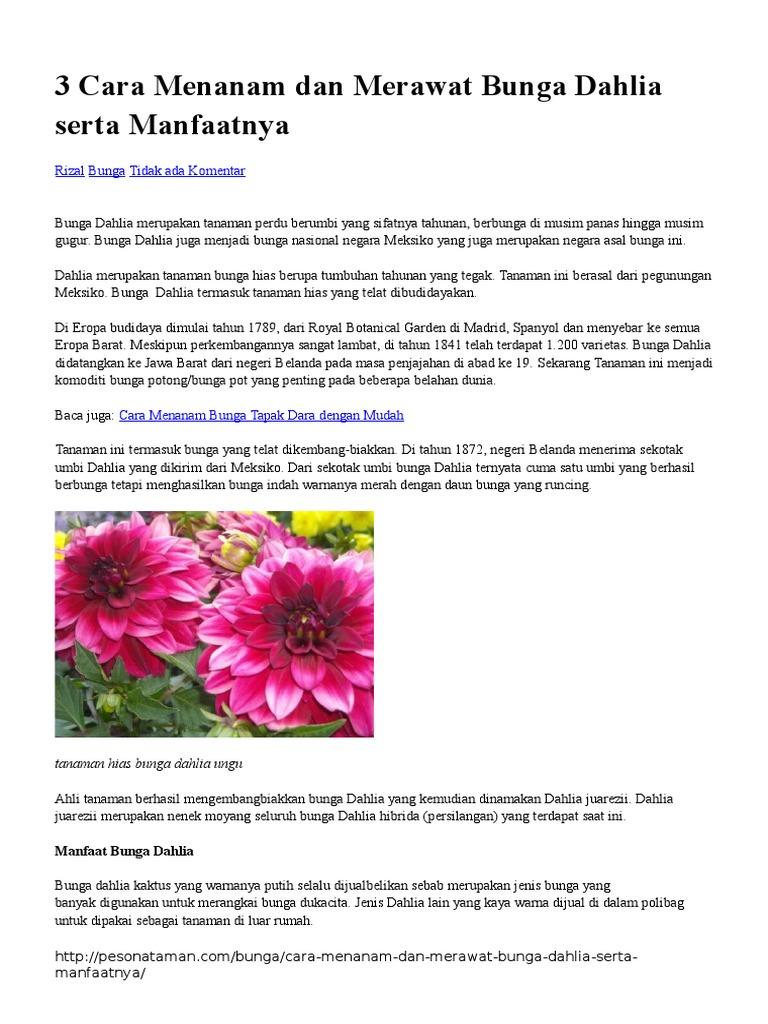3 Cara Menanam Dan Merawat Bunga Dahlia Serta Manfaatnya Docx