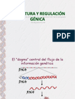 13.- Estructura y Regulacion Genica 2013.Ppt
