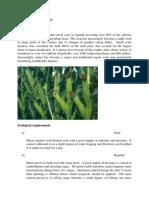 MAIZE Production Guide.doc
