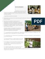 Actividades Productivas de Centroamerica
