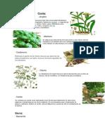 Plantas medicinales Ecuador