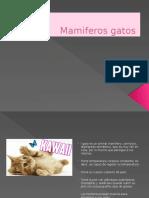 Mamiferos Gatos