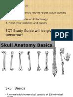skull anatomy basics