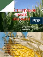 El Cultivo de Maiz