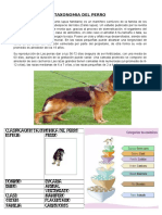 Taxonomia de Los Animales