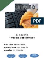 El Caucho Presentacion