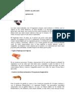 Crustáceos de Cuerpo Alargado
