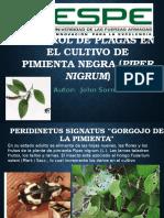 Control Plagas en Pimienta
