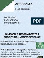 Division Gimnospermas (1)