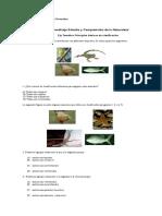 28802946-Guia-4º-Naturaleza.doc